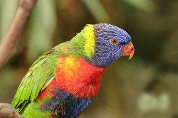 Birds Name parrot