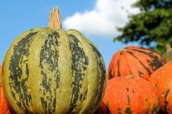 Pumpkin - कद्दू सब्जी