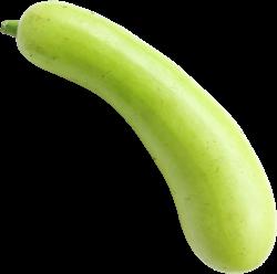 bottel Gourd Vegetable