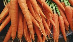 Carrots Vegetables In Hindi