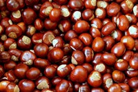 Chestnut meaning