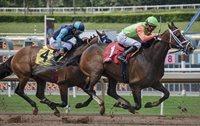Horse Race Sports